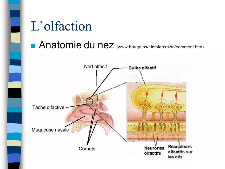 L'olfaction Anatomie du nez (www.hcuge.ch/~infotec/rhino/comment.htm)
