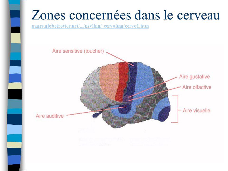 Zones concernées dans le cerveau pages. globetrotter. net/