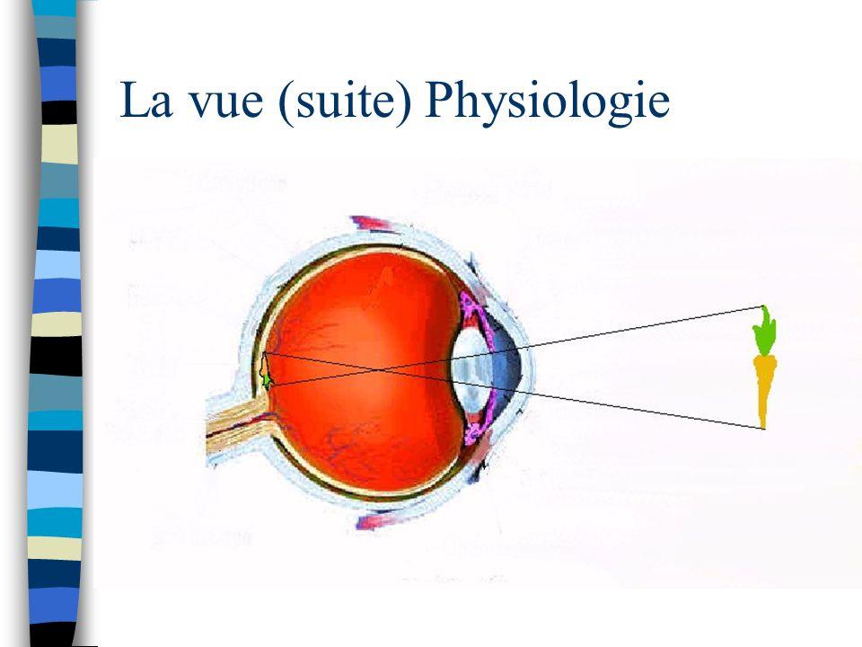 La vue (suite) Physiologie