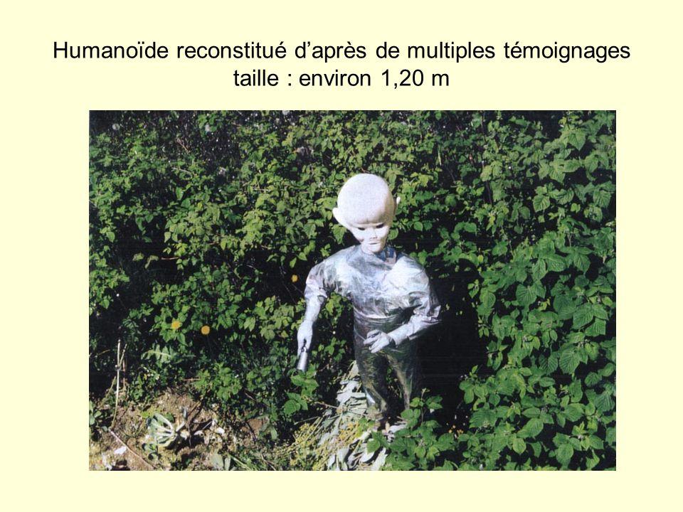 Humanoïde reconstitué d'après de multiples témoignages taille : environ 1,20 m