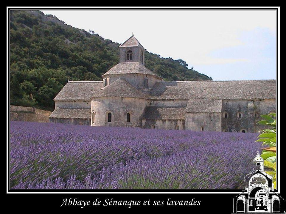 Abbaye de Sénanque et ses lavandes