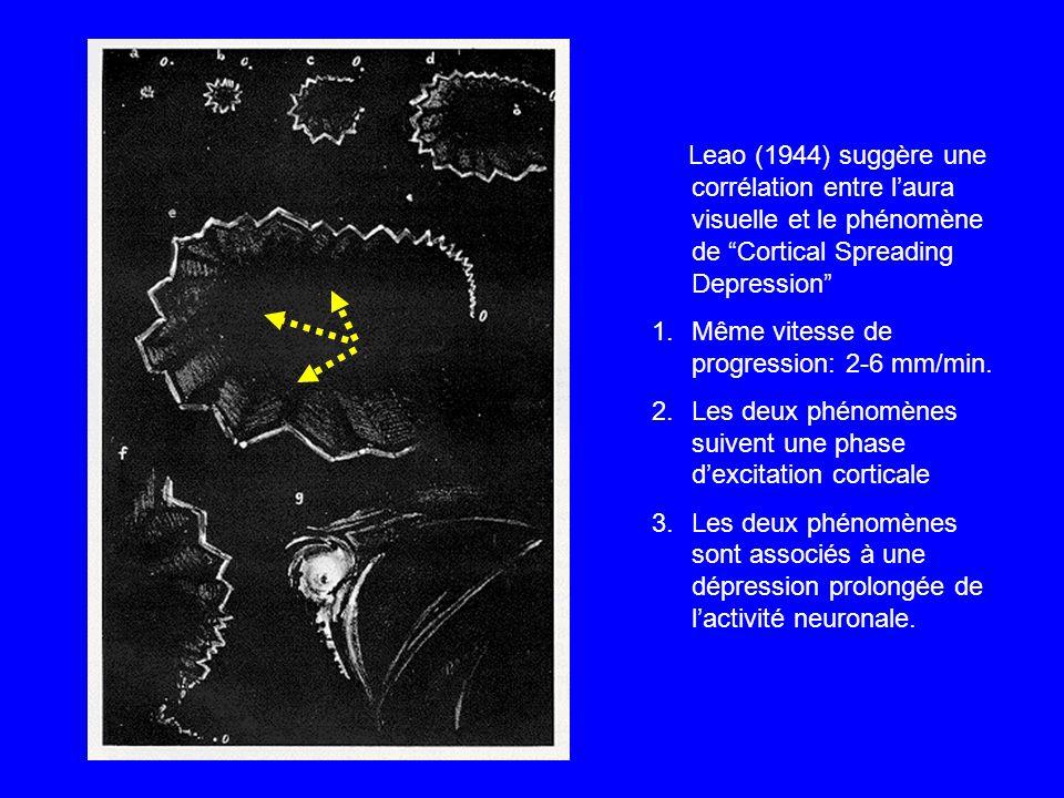 Leao (1944) suggère une corrélation entre l'aura visuelle et le phénomène de Cortical Spreading Depression