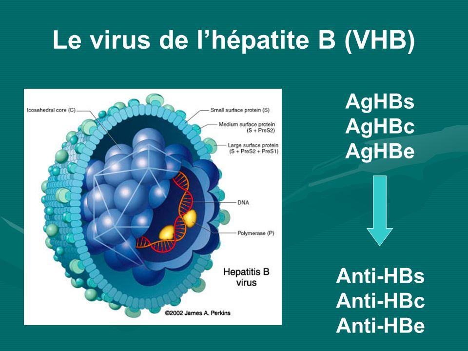 Le virus de l'hépatite B (VHB)