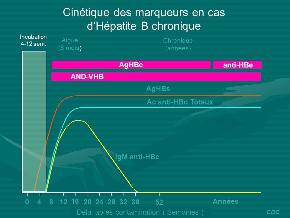 Cinétique des marqueurs en cas d'Hépatite B chronique