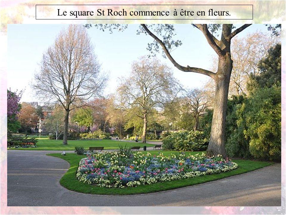 Le square St Roch commence à être en fleurs.
