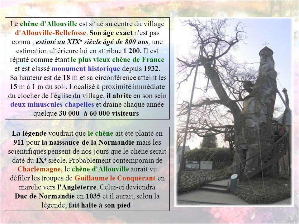 Le chêne d Allouville est situé au centre du village d Allouville-Bellefosse. Son âge exact n est pas connu ; estimé au XIXe siècle âgé de 800 ans, une estimation ultérieure lui en attribue 1 200. Il est réputé comme étant le plus vieux chêne de France et est classé monument historique depuis 1932.