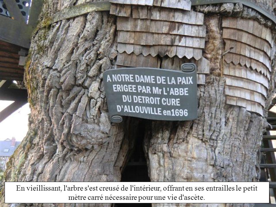 En vieillissant, l arbre s est creusé de l intérieur, offrant en ses entrailles le petit mètre carré nécessaire pour une vie d ascète.