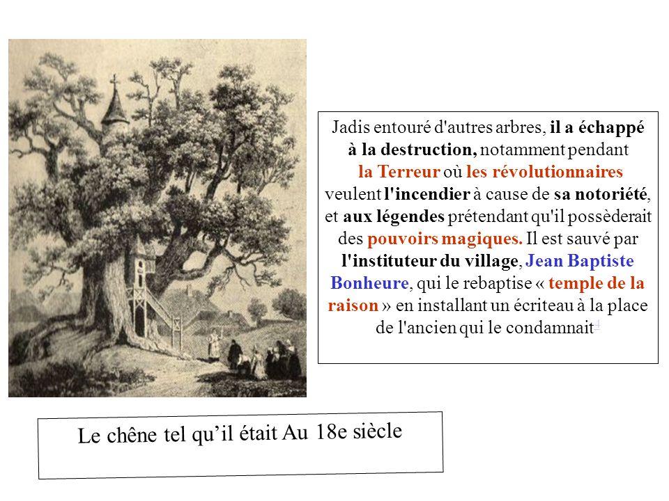 Le chêne tel qu'il était Au 18e siècle