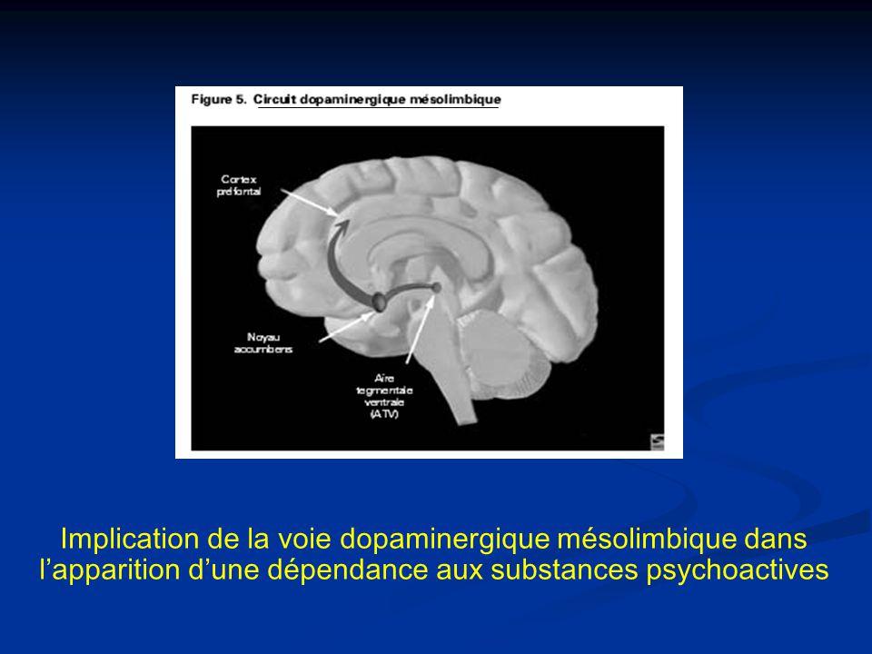 Implication de la voie dopaminergique mésolimbique dans l'apparition d'une dépendance aux substances psychoactives