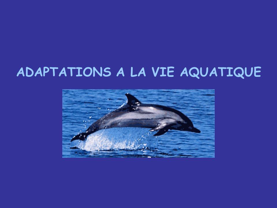 ADAPTATIONS A LA VIE AQUATIQUE