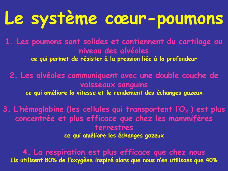 Le système cœur-poumons