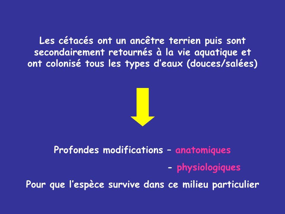 Profondes modifications – anatomiques - physiologiques