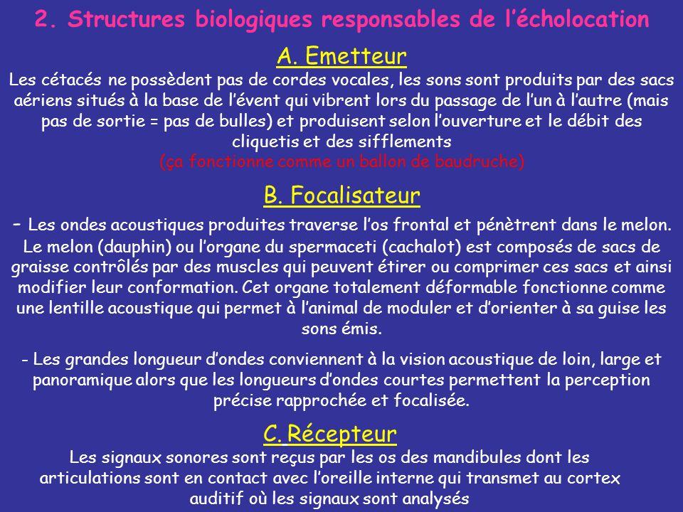 2. Structures biologiques responsables de l'écholocation