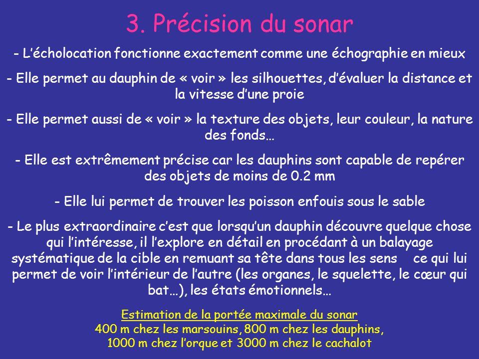 3. Précision du sonar - L'écholocation fonctionne exactement comme une échographie en mieux.