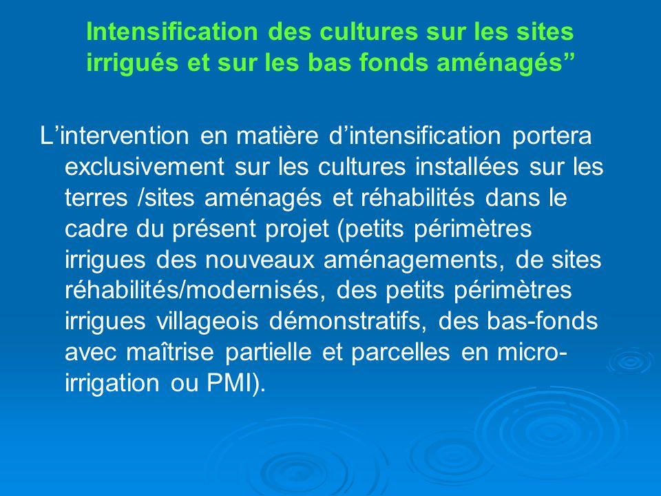 Intensification des cultures sur les sites irrigués et sur les bas fonds aménagés