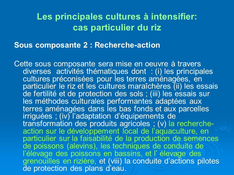 Les principales cultures à intensifier: cas particulier du riz