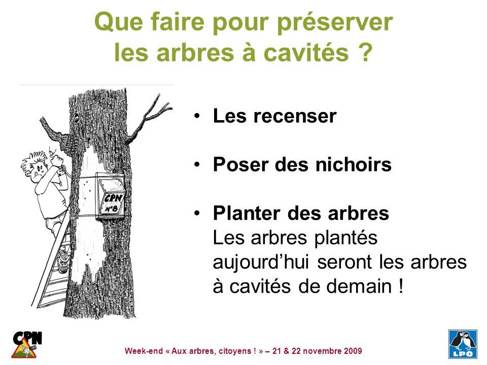 Que faire pour préserver les arbres à cavités