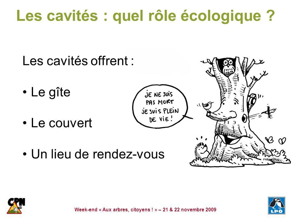 Les cavités : quel rôle écologique