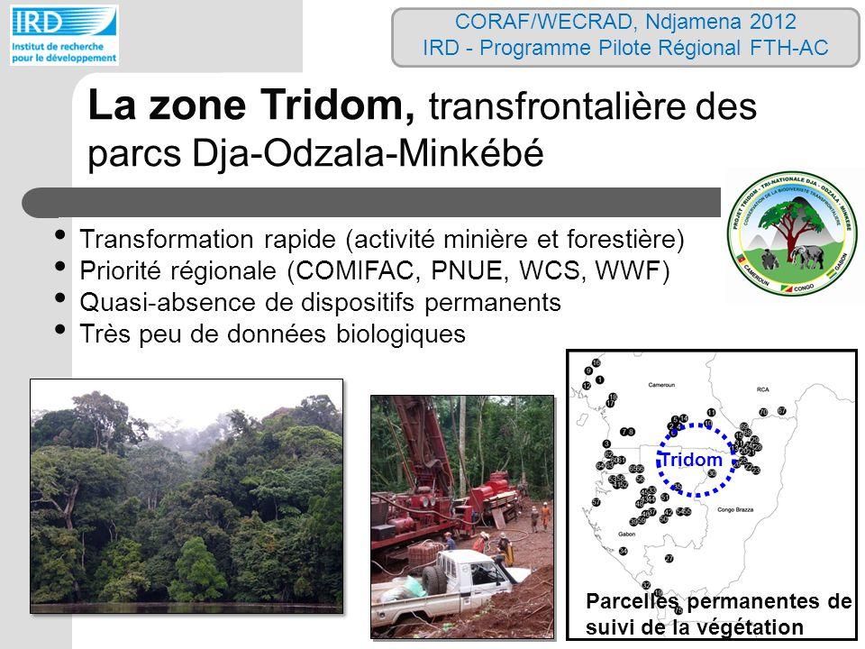La zone Tridom, transfrontalière des parcs Dja-Odzala-Minkébé