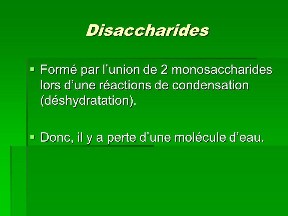 Disaccharides Formé par l'union de 2 monosaccharides lors d'une réactions de condensation (déshydratation).