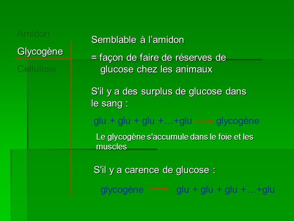 = façon de faire de réserves de glucose chez les animaux