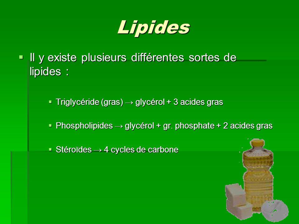 Lipides Il y existe plusieurs différentes sortes de lipides :