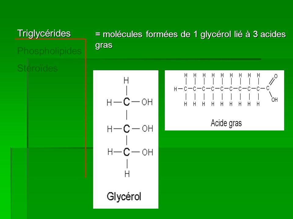 Triglycérides Phospholipides Stéroïdes