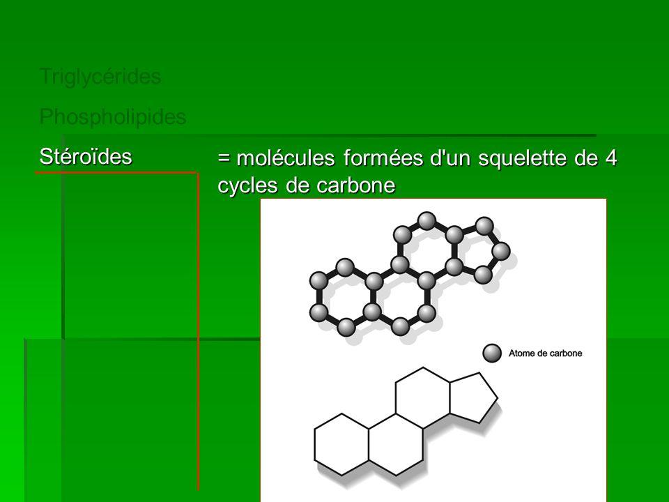 Triglycérides Phospholipides Stéroïdes = molécules formées d un squelette de 4 cycles de carbone