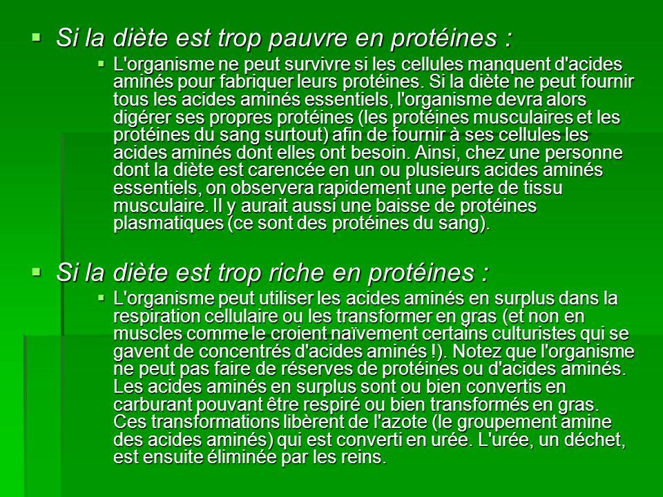 Si la diète est trop pauvre en protéines :