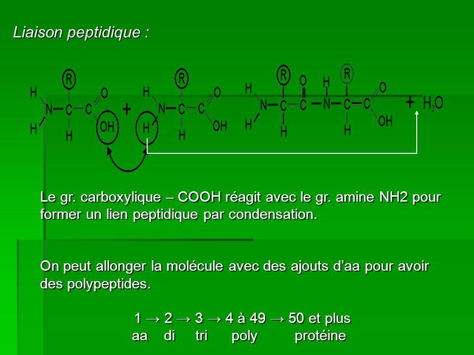 Liaison peptidique : Le gr. carboxylique – COOH réagit avec le gr. amine NH2 pour former un lien peptidique par condensation.