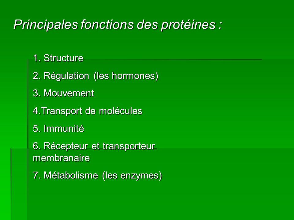 Principales fonctions des protéines :