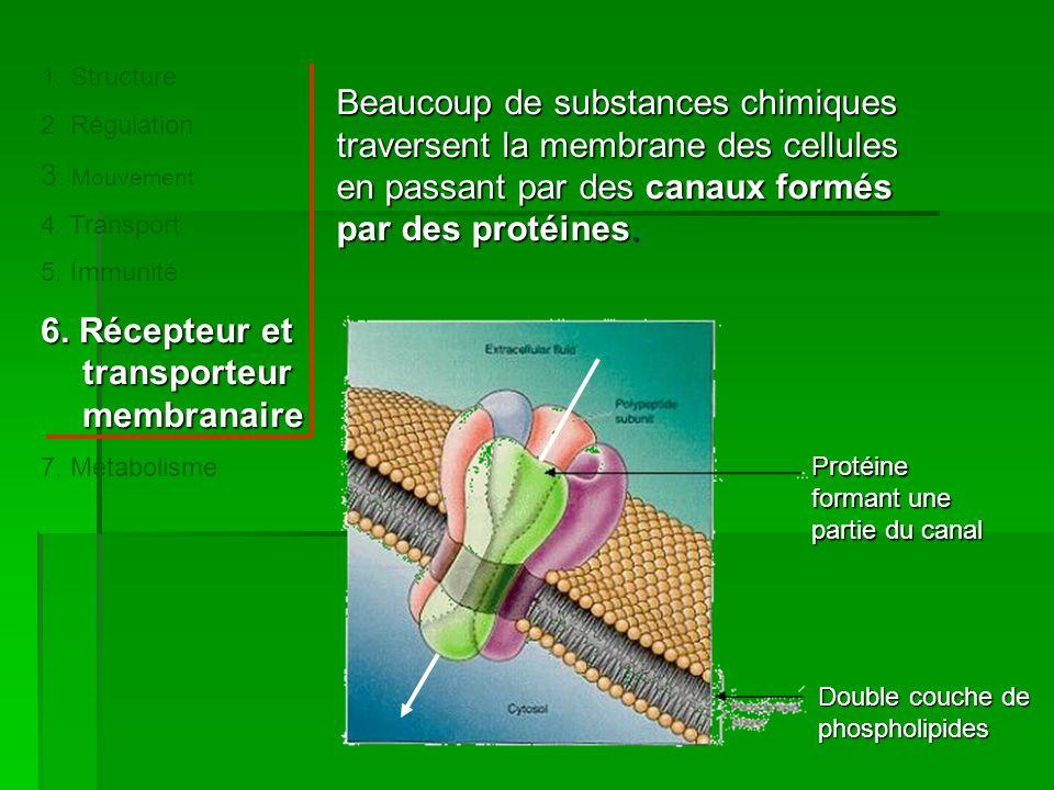 6. Récepteur et transporteur membranaire