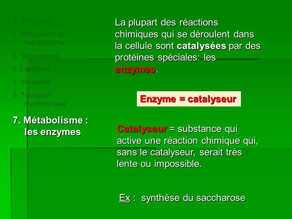 7. Métabolisme : les enzymes