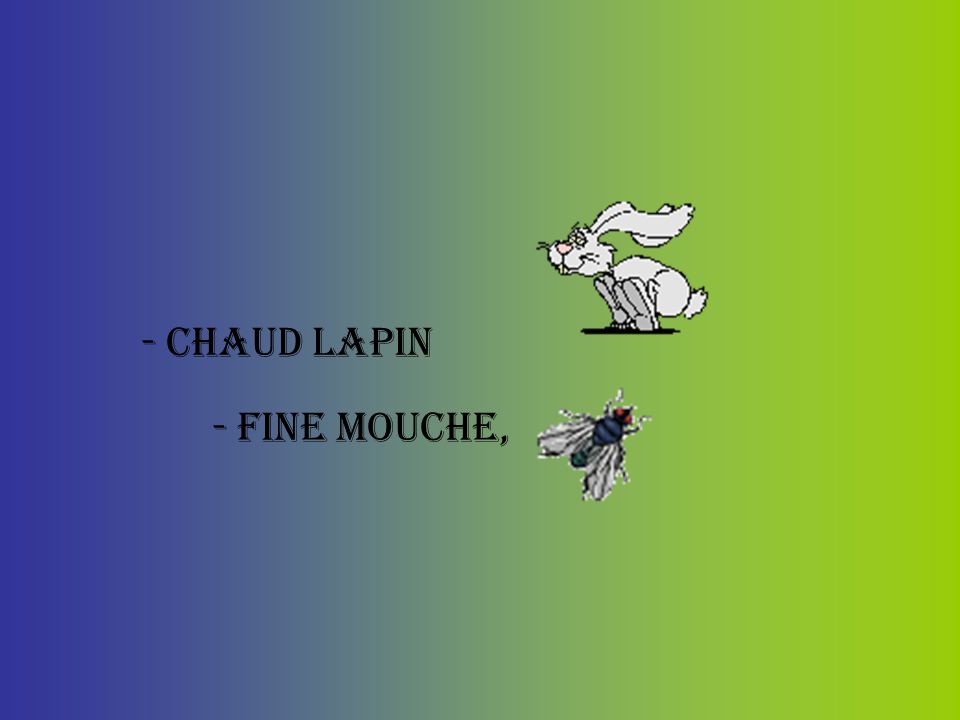 - chaud lapin - fine mouche,