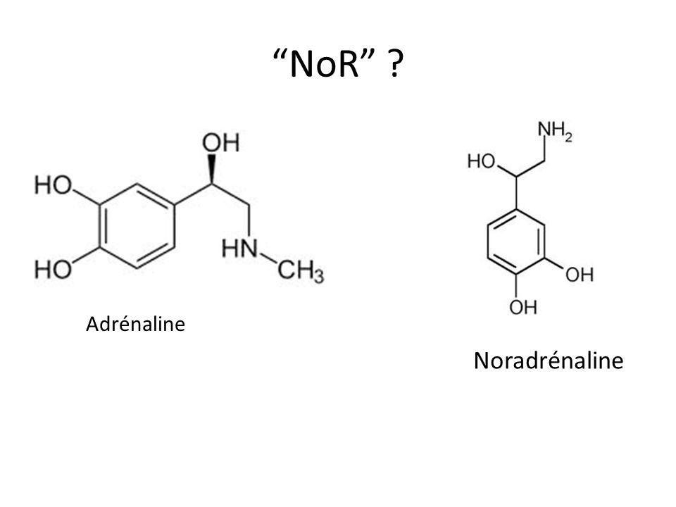 NoR Adrénaline Noradrénaline