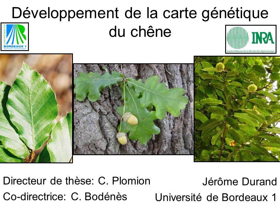 Développement de la carte génétique du chêne