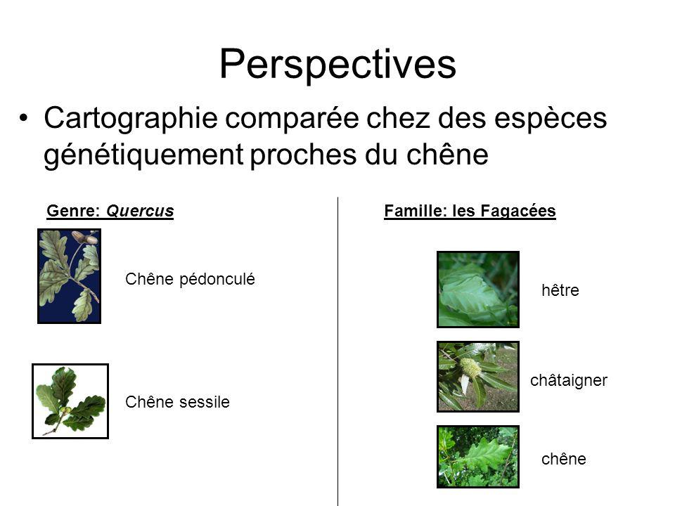 Perspectives Cartographie comparée chez des espèces génétiquement proches du chêne. Genre: Quercus.
