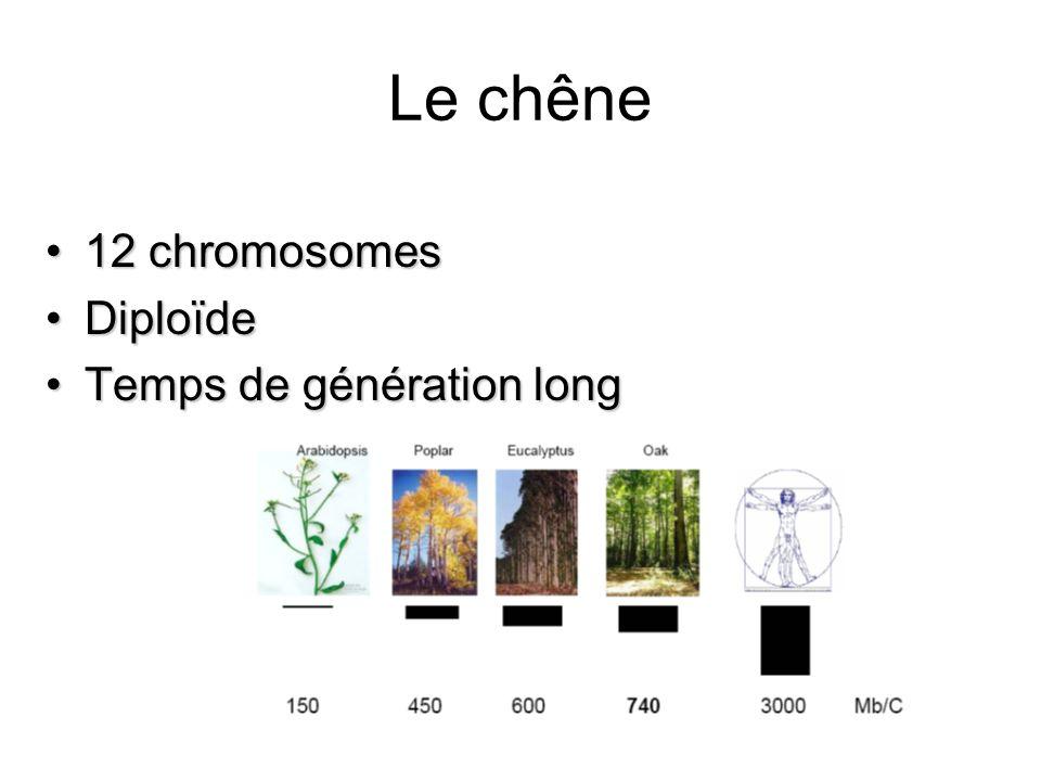 Le chêne 12 chromosomes Diploïde Temps de génération long