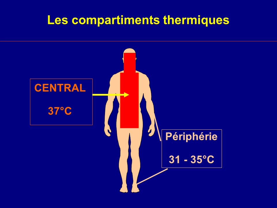 Les compartiments thermiques