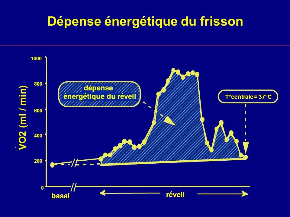 Dépense énergétique du frisson