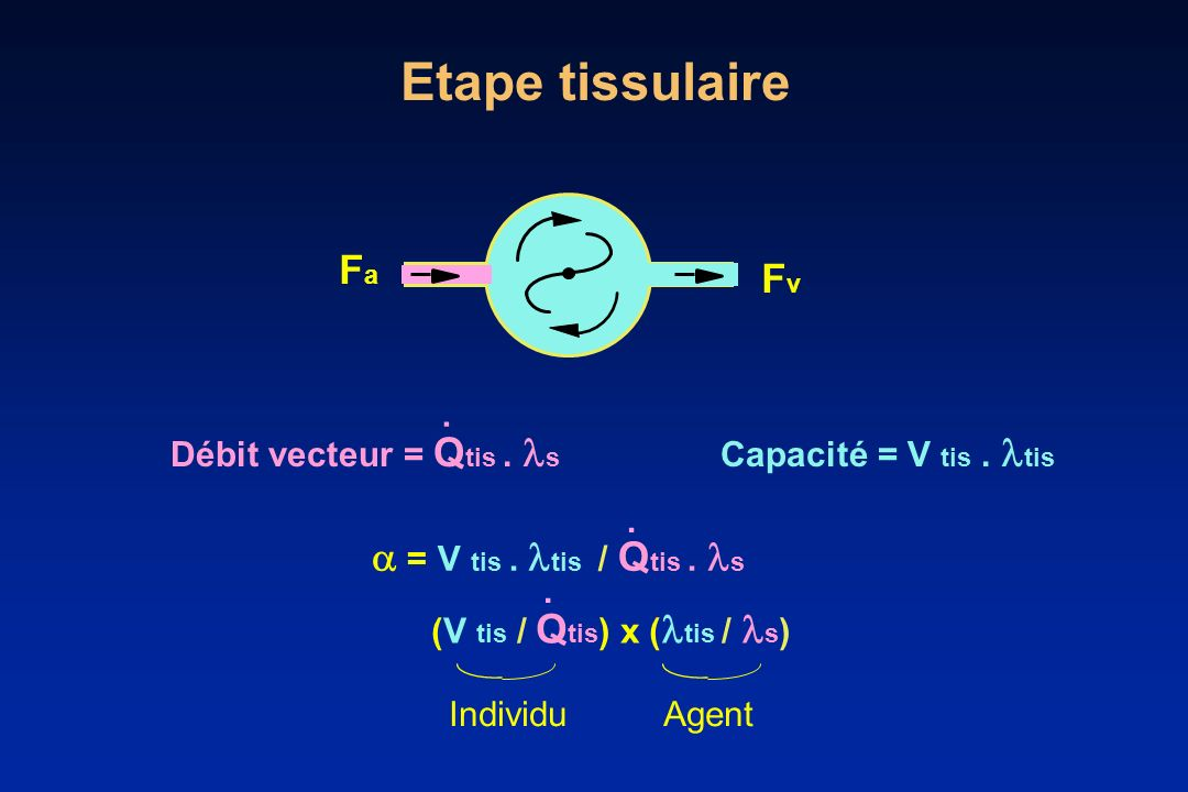 Etape tissulaire Fa Fv  = V tis . tis / Qtis . s J