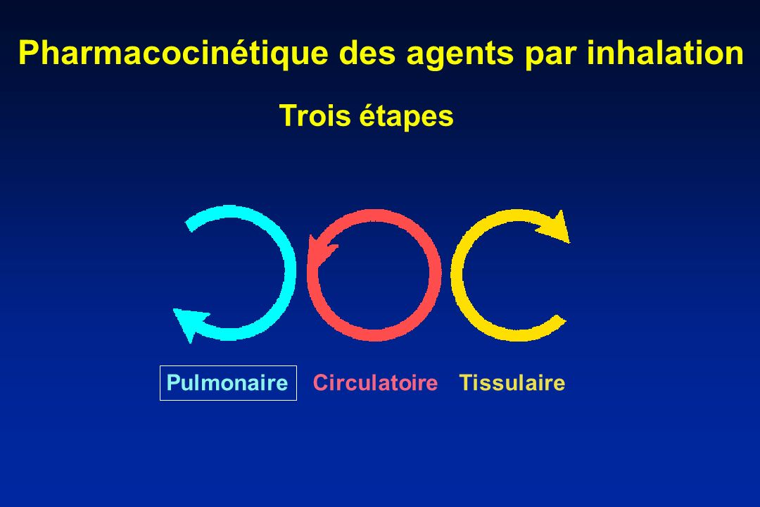 Pharmacocinétique des agents par inhalation