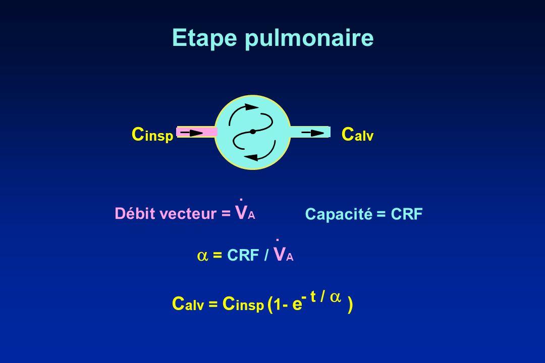 Etape pulmonaire Cinsp Calv  = CRF / VA Calv = Cinsp (1- e ) J .