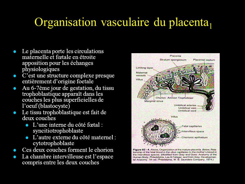 Organisation vasculaire du placenta1