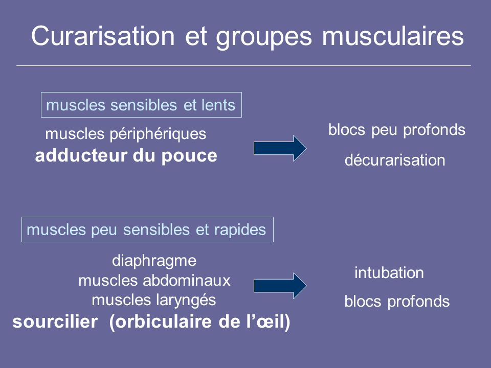 Curarisation et groupes musculaires