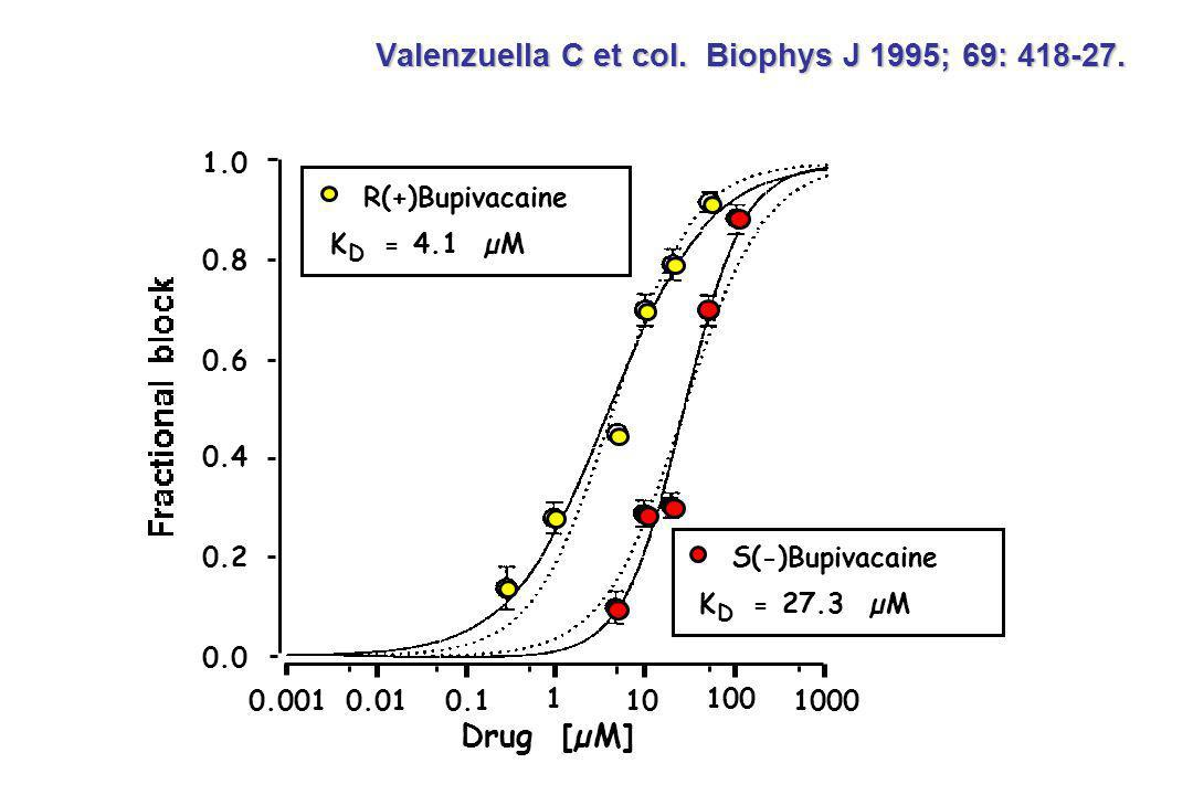 Valenzuella C et col. Biophys J 1995; 69: 418-27.