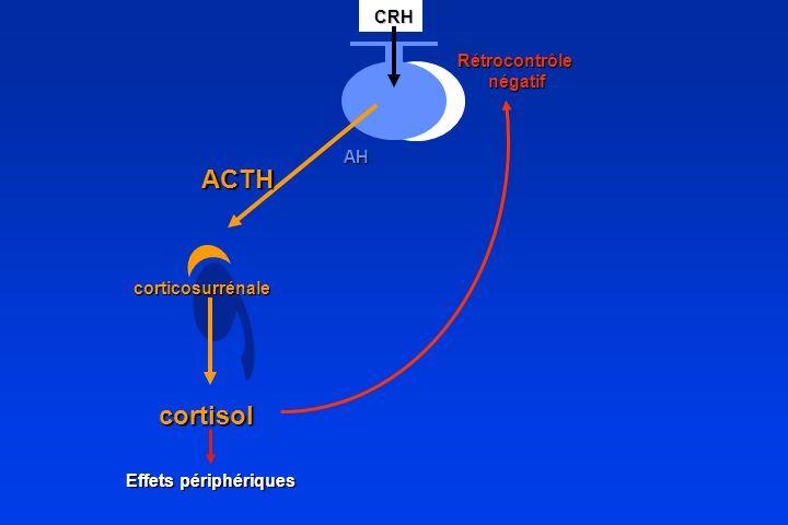 ACTH cortisol CRH Rétrocontrôle négatif AH corticosurrénale
