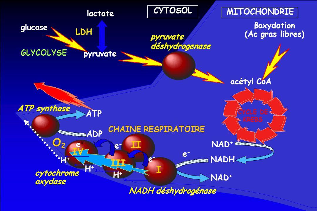 O2 II IV III I CYTOSOL MITOCHONDRIE lactate glucose ßoxydation LDH