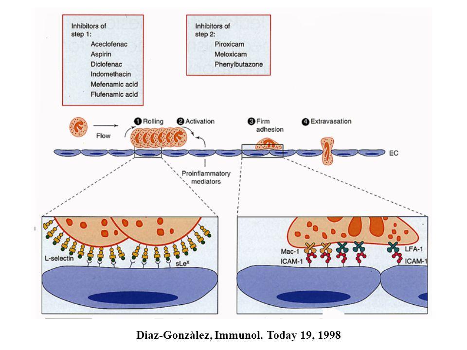 Diaz-Gonzàlez, Immunol. Today 19, 1998