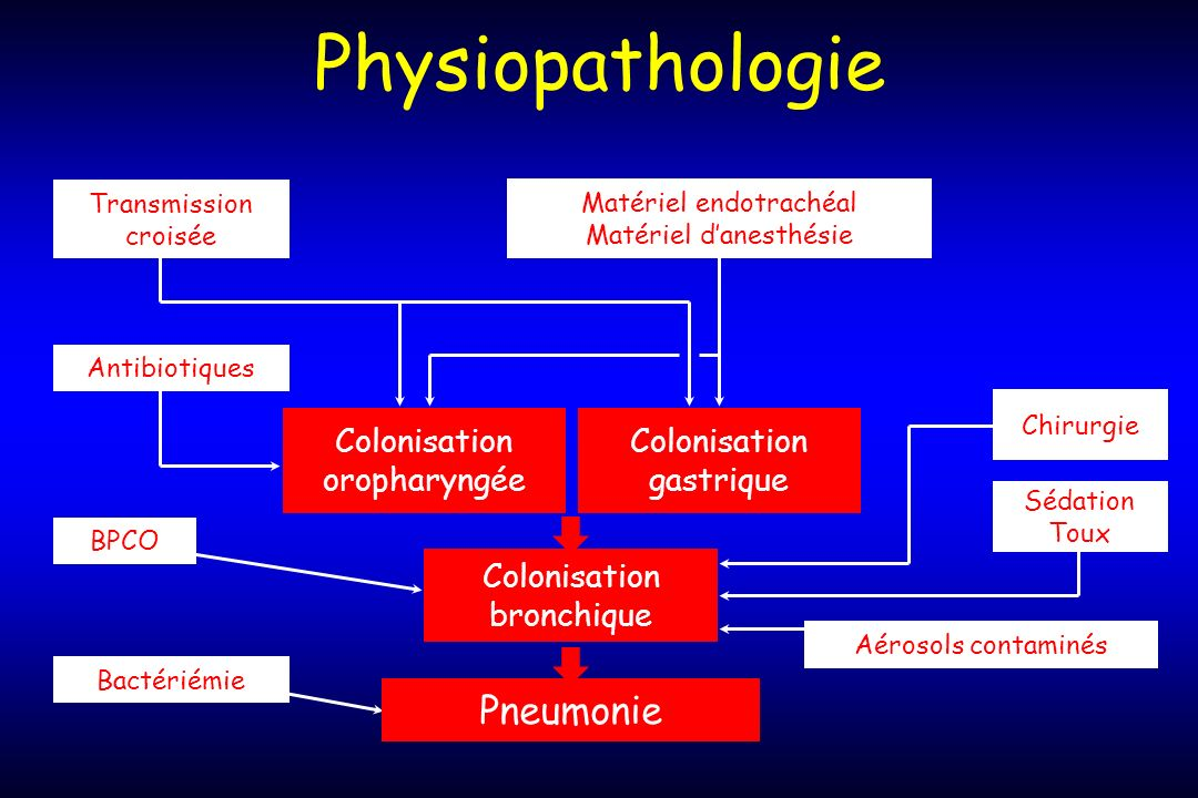 Physiopathologie Pneumonie Colonisation bronchique